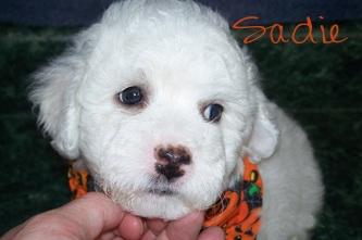 Sadie Poo