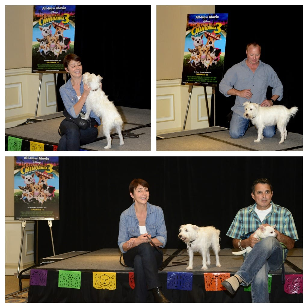 Interview With The Dog Trainers
