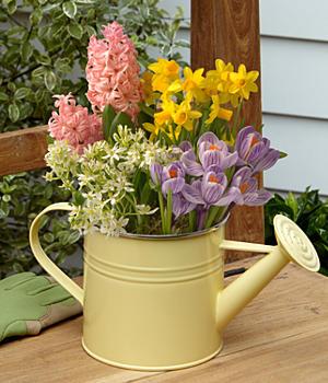ProFlowers Review: Easter Morning Bulb Garden