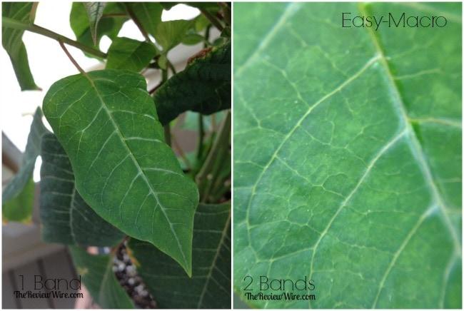 Leaf Easy Macro