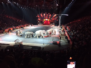 Ringling Bros. Circus Elephants