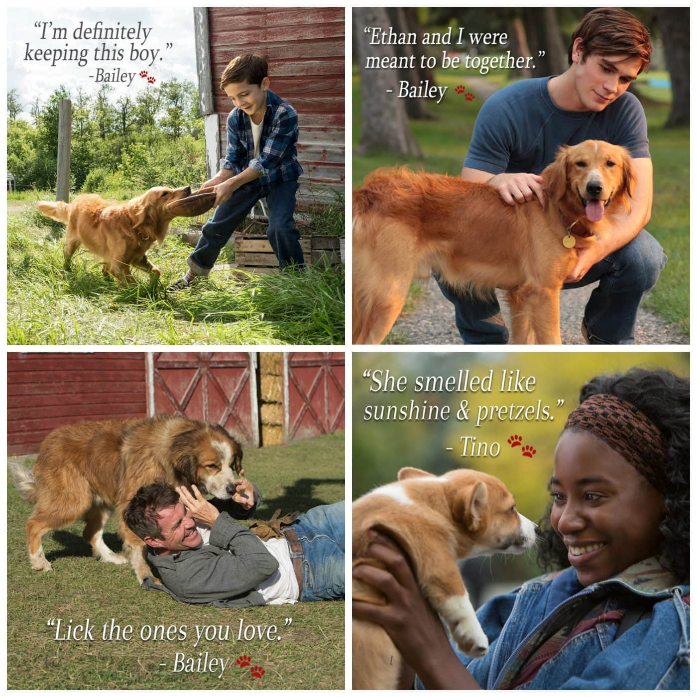 A Dog S Purpose Quotes