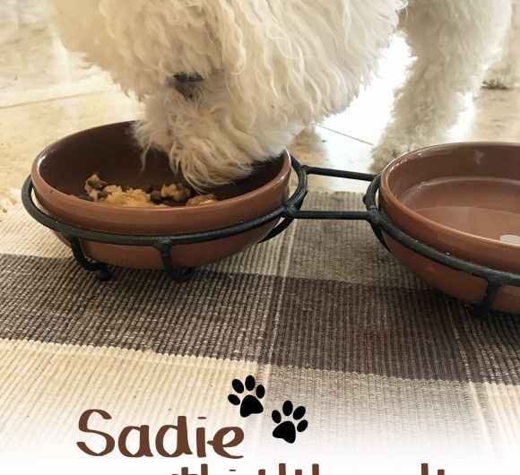 The Review Wire Sadie Delectables