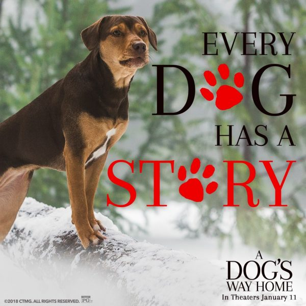 Every Dog Has a Story - A Dog's Way Home