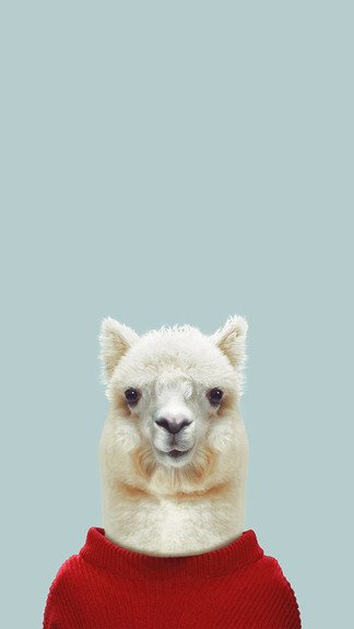 iPhone Wallpaper: Alpaca in Sweater