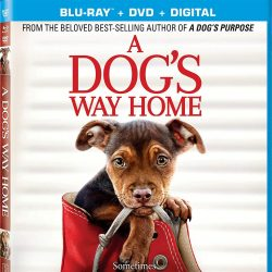 A Dog's Way Home Blu-ray + DVD + Digital