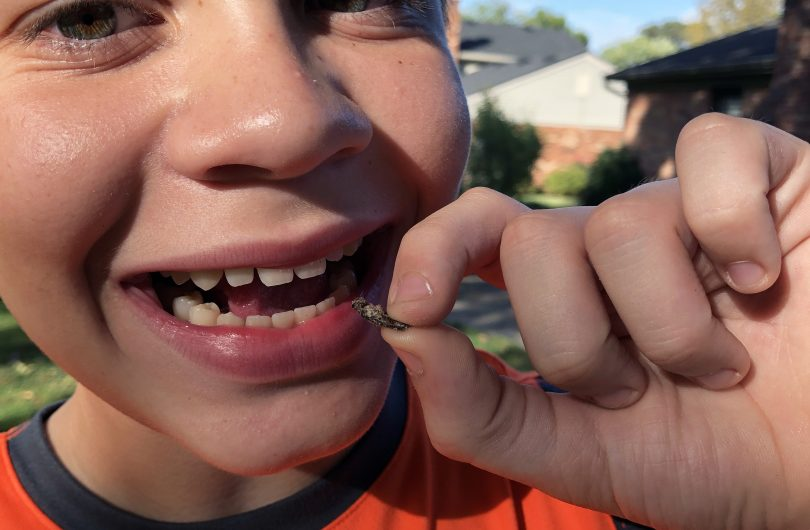 The Review Wire: Eating Lemon Flavored Cricket