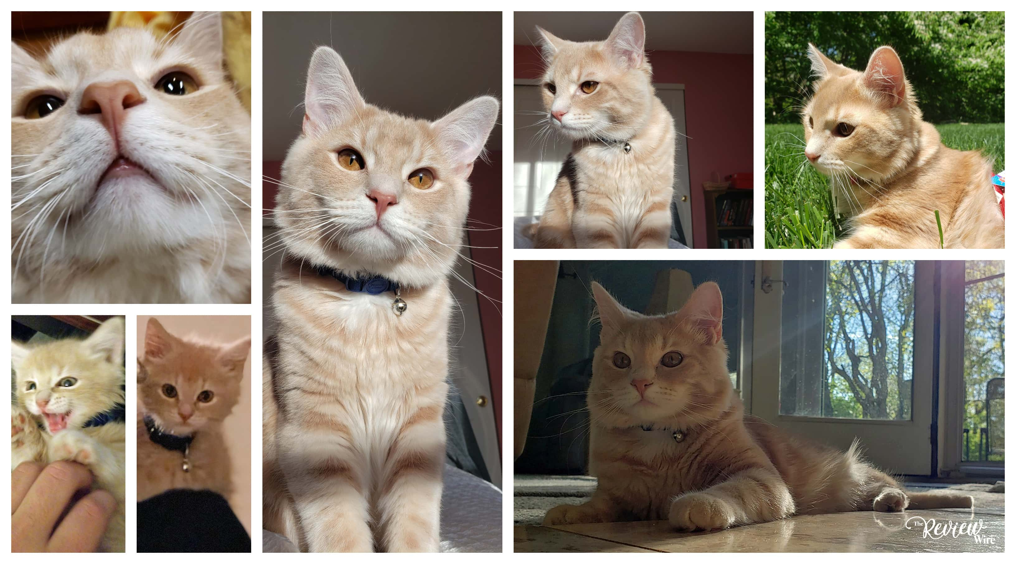 The Review Wire: Wedge the Cat