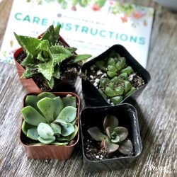 The Review Wire Holiday Gift Guide: Succulents Box Monthly Subscription