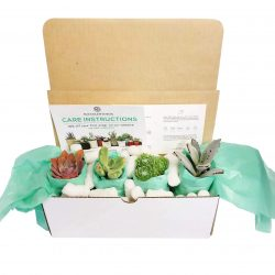 The Review Wire Holiday Gift Guide 2020: Succulents Box Monthly Subscription