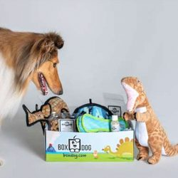 The Review Wire Holiday Gift Guide 2020: BoxDog Monthly Subscription